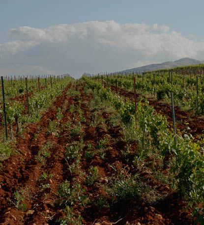Vineyard & Terroir